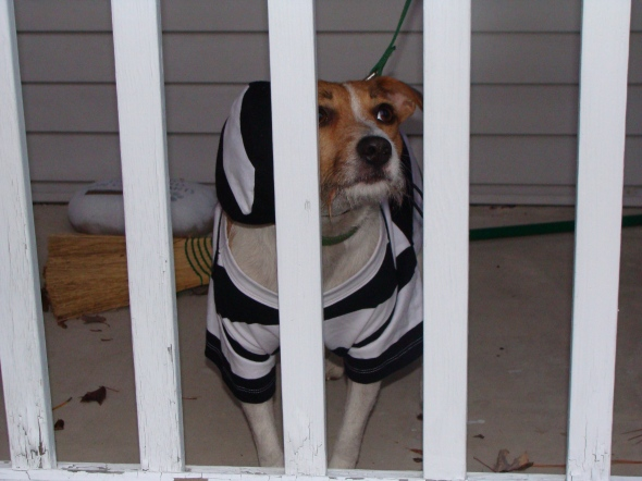 Doggie jail (aka our front porch)